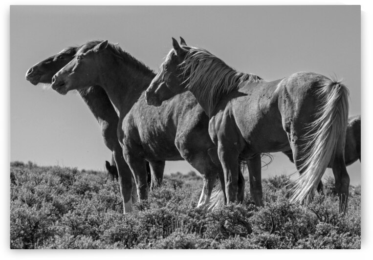 Wild Horse Lineup by Evan Petty Photography