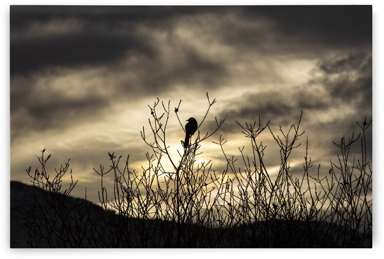 Resting Bird at Sunset by Evan Petty Photography