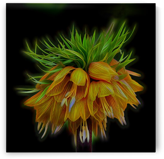 Crown Imperial by COOL ART BY RICHARD