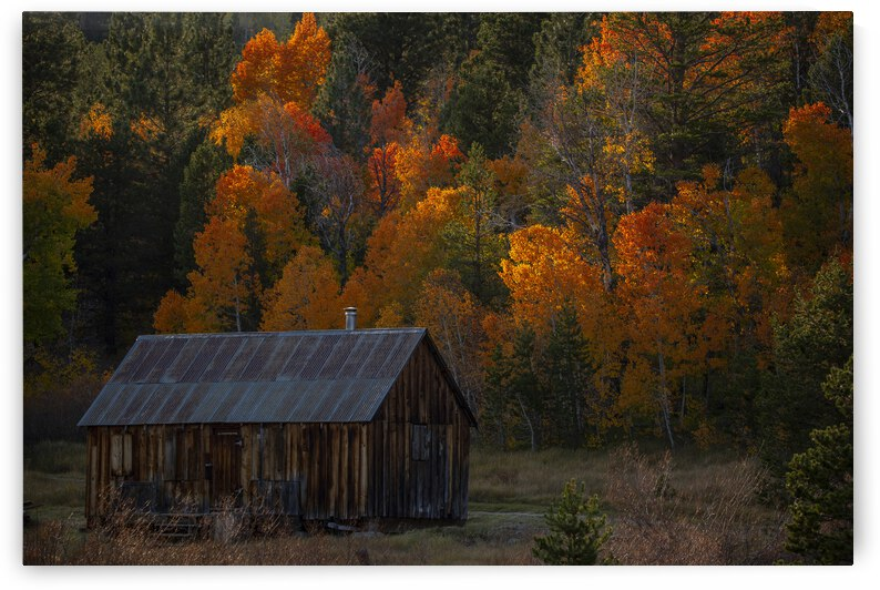 Trees and a Cabin by Evan Petty Photography