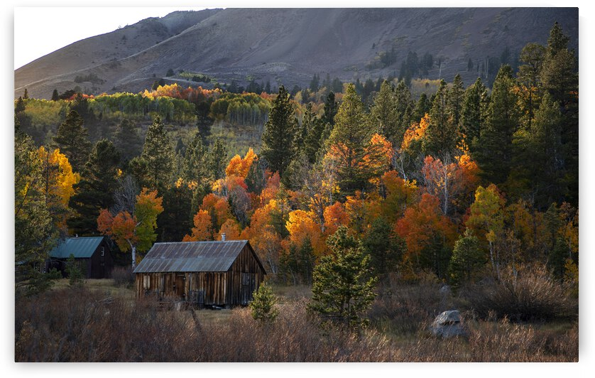 Autumn Trees and Forest Homes by Evan Petty Photography