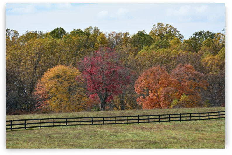Virginia Fall Photograph by Katherine Lindsey Photography