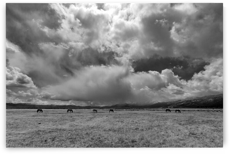 Wild Horses and Storm Clouds by Evan Petty Photography