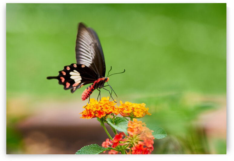 Butterfly perching on the flower by Krit of Studio OMG