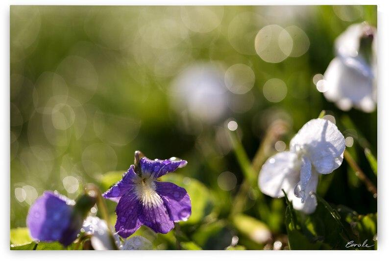 Confettis au jardin 4 by Pierre Cavale