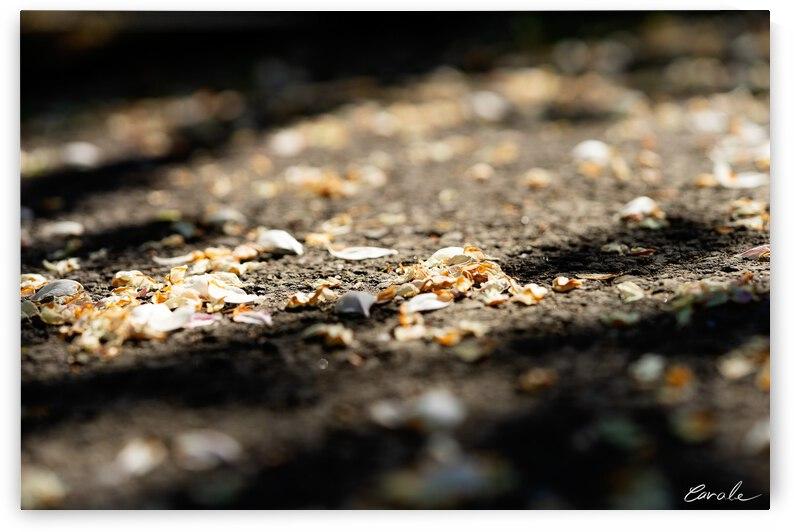Confettis sur bitume by Pierre Cavale