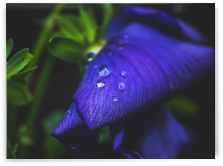 Drops With Blue by Bone Photo