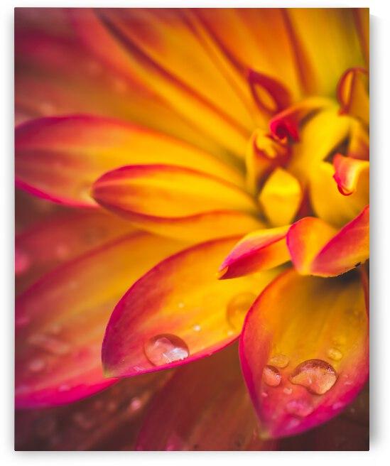 Rain On The Flowers by Bone Photo