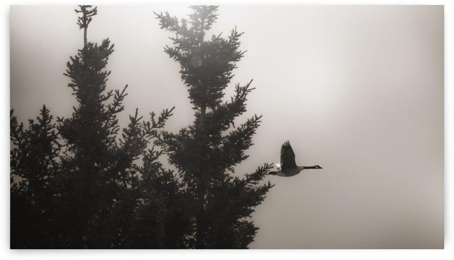 Morning Fog by Bone Photo