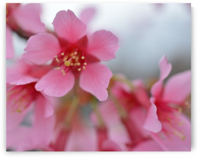 Soft Pink Floral Photograph by Katherine Lindsey Photography