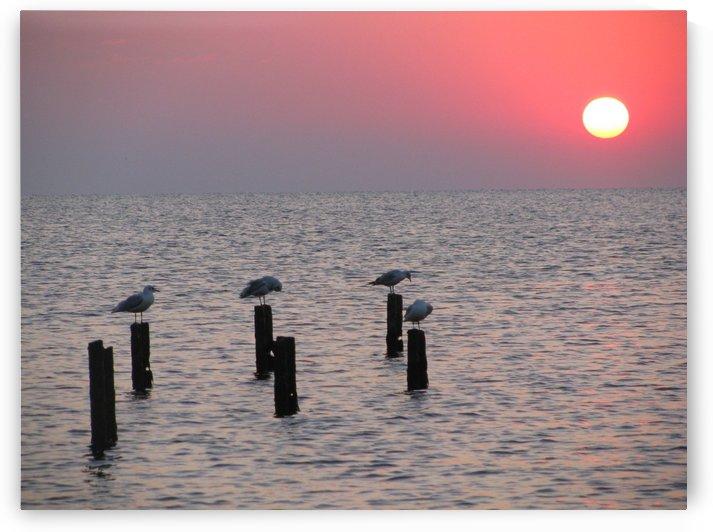 Birds at sunrise near Bulgarian shore by Vlad Radulian