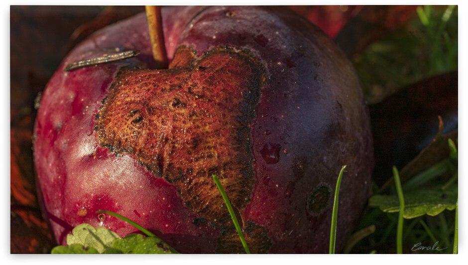 La pomme tatouee - The tattooed apple by Pierre Cavale