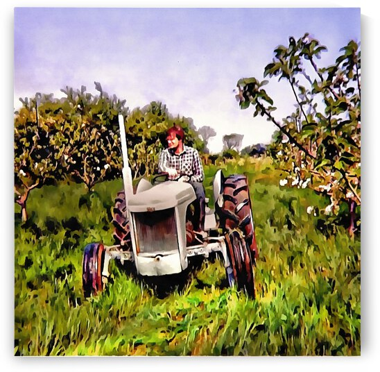 One Man And His Fergie Tractor by Dorothy Berry-Lound