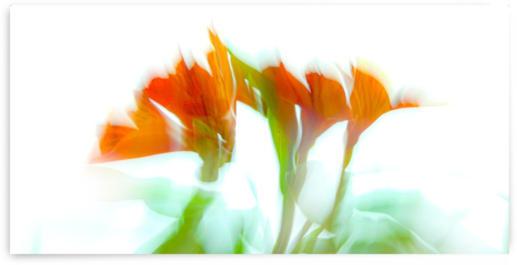 Gerbera Daisy Abstract 3 by Leslie K Joseph