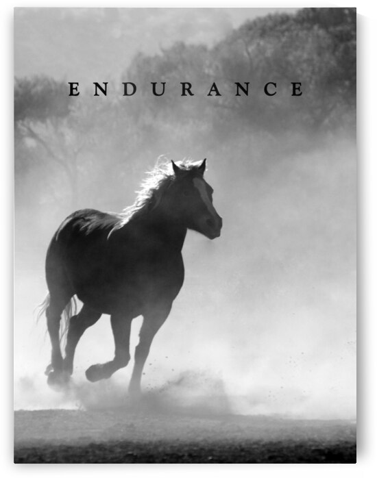 Horse Endurance Motivational Wall Art by ABConcepts