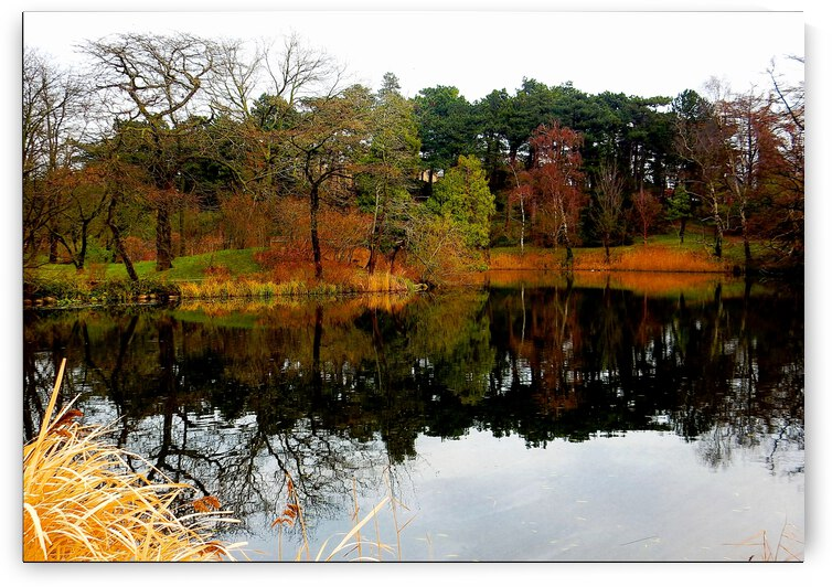 Botanic Garden Reflections by Dorothy Berry-Lound