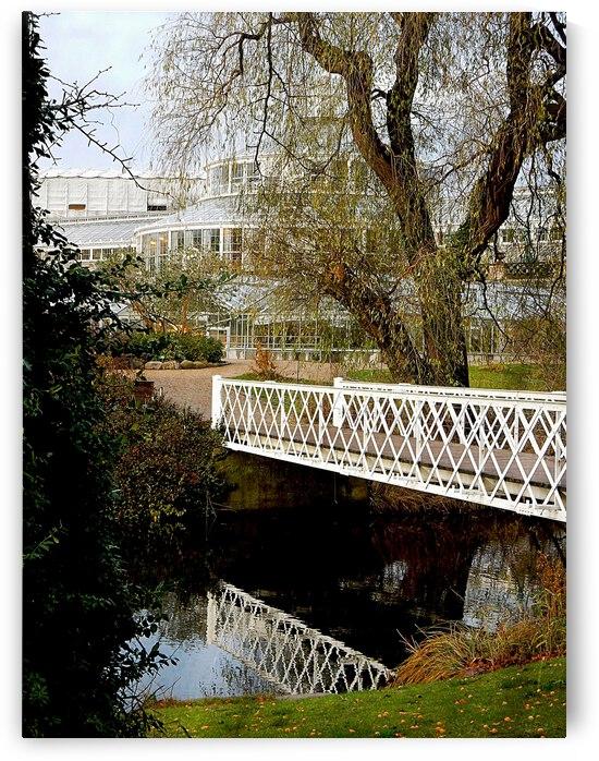 The White Bridge by Dorothy Berry-Lound