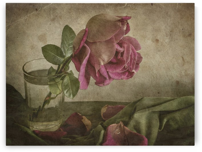 Tear of Rose by 1x