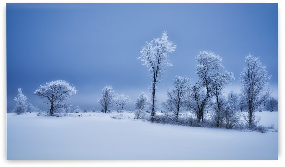 Winterland by 1x