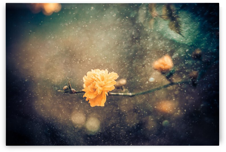 Spring by 1x