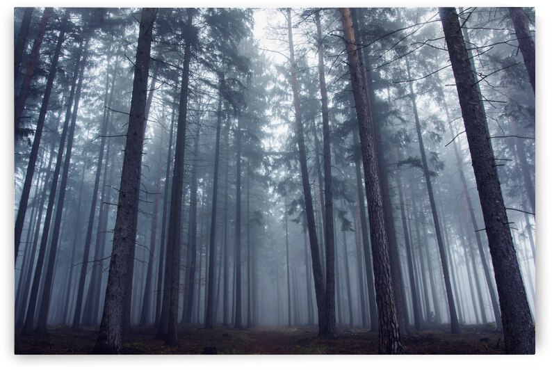 Mysterious foggy forest. by 1x