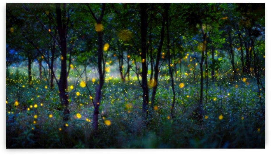 Magic fireflies by 1x
