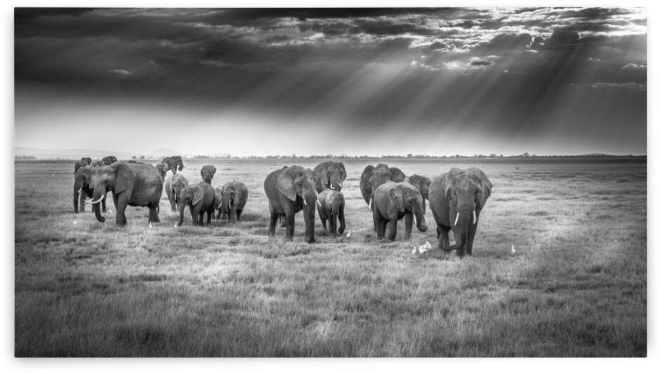 Breakfast with pachyderms by 1x