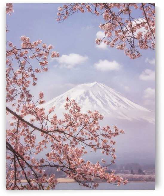 Mt.Fuji in the cherry blossoms by 1x