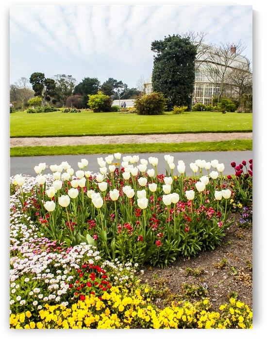 Botanic Garden II by Andre Luis Leme