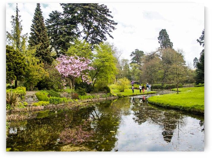 Botanic Garden III by Andre Luis Leme