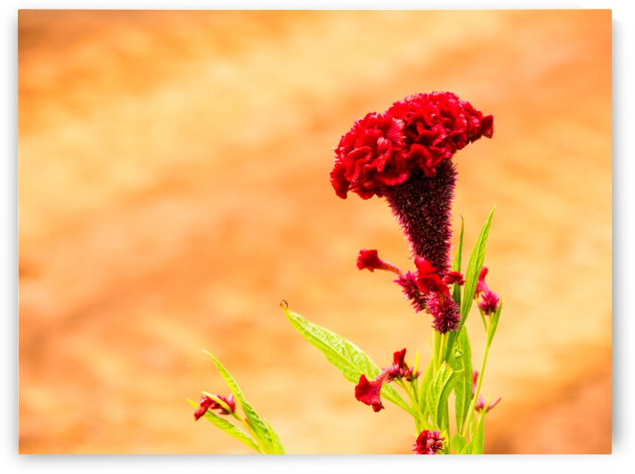 Red Flower by Andre Luis Leme