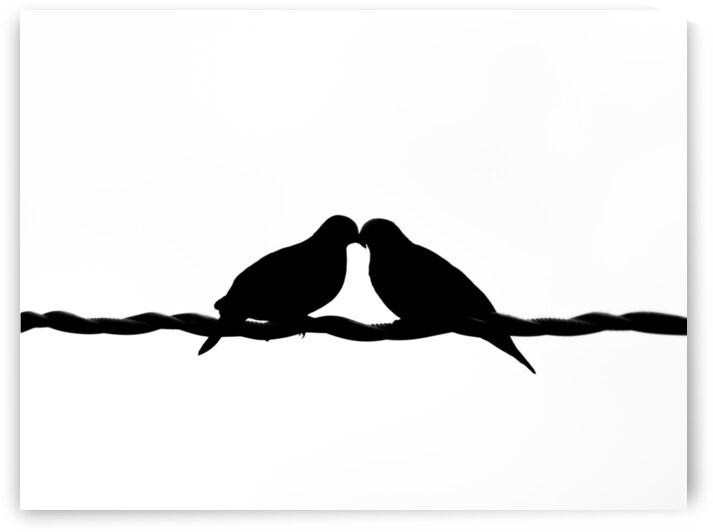 Doves Flirting by Andre Luis Leme