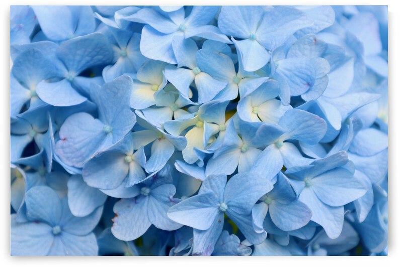 Carolina Blue by Franklin Oldham