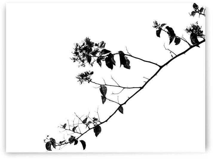 Tree Branch II by Andre Luis Leme