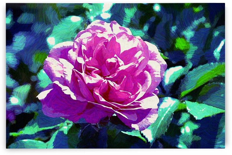 Pink Rose by Barbara Treen