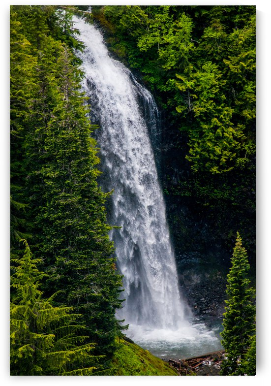 Waterfall in the Forest by Barbara Treen