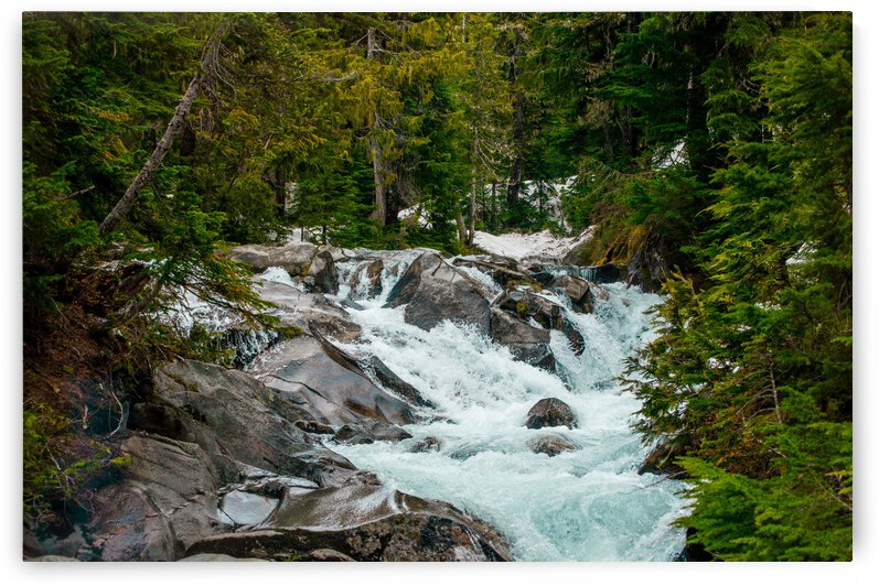 Wild Water in the Mountains by Barbara Treen