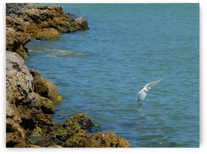 Bird 12 by Morteza Golpoor