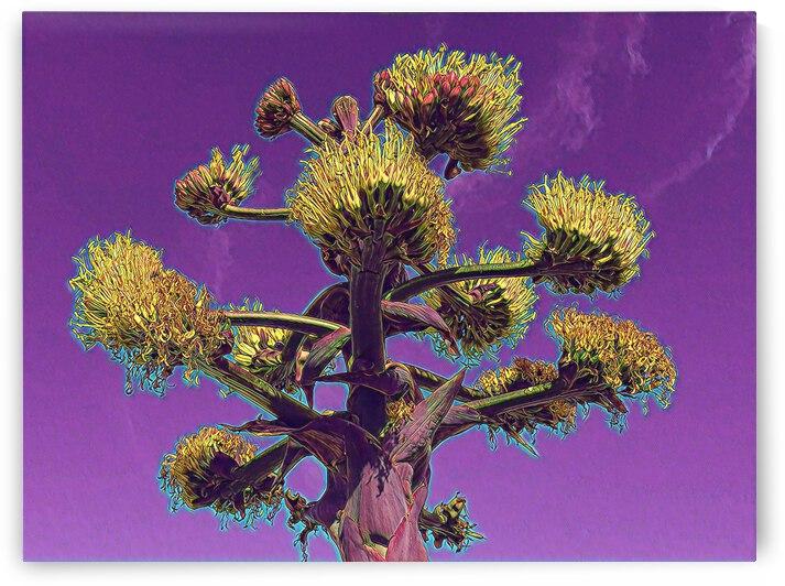 San Diego Cacti 5 by Mary Jo s Art Inspirations