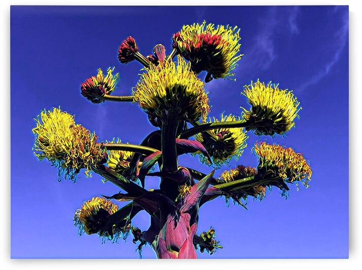 San Diego Cacti 4 by Mary Jo s Art Inspirations