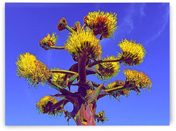 San Diego Cacti 3 by Mary Jo s Art Inspirations