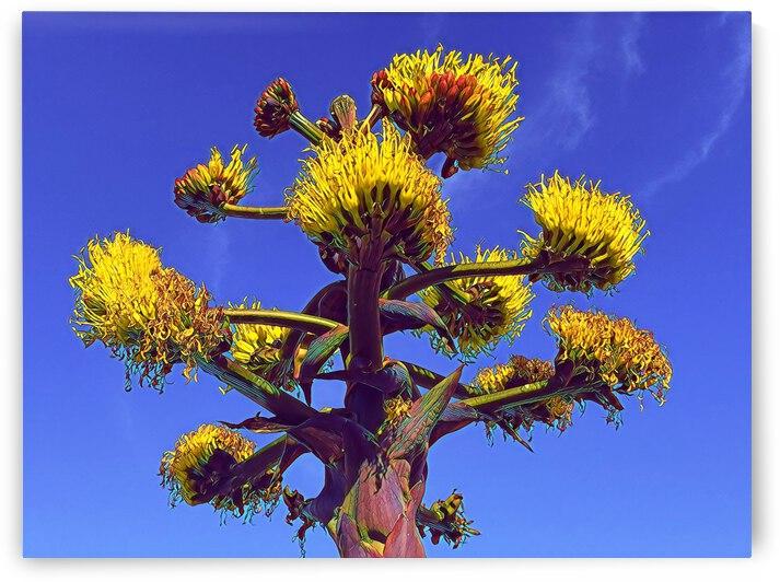 San Diego Cacti 2 by Mary Jo s Art Inspirations