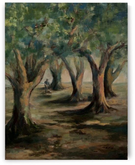 Oak trees by Cene