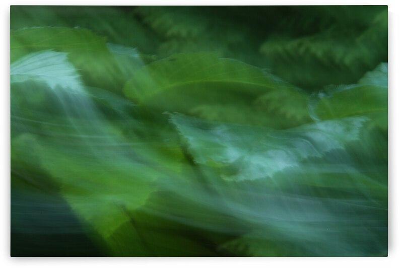 leaves by A C Heichelmann