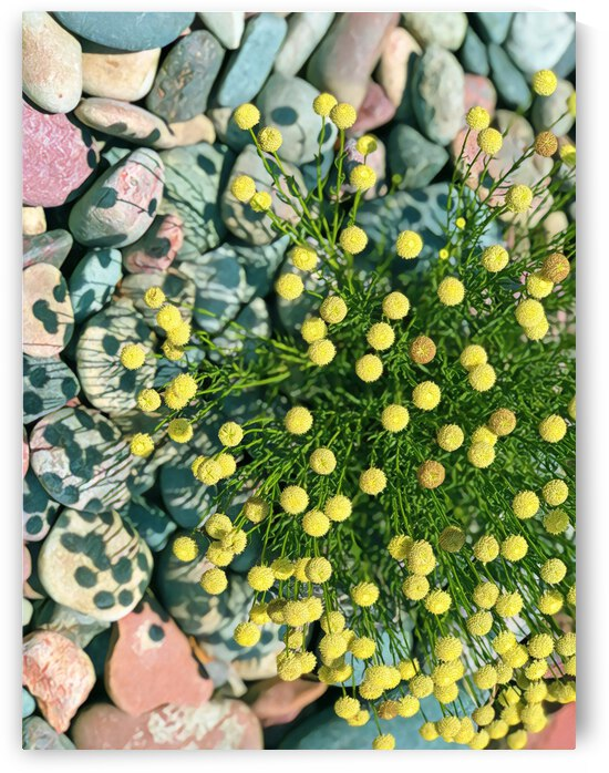 yellow button flower 2 by Mary Jo s Art Inspirations