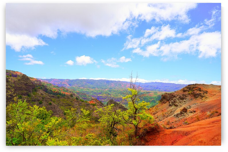 Beautiful View in the Waimea Canyon Area in the Puu Ka Pele Forest Reserve on the Island of Kauai Hawaii by 1North