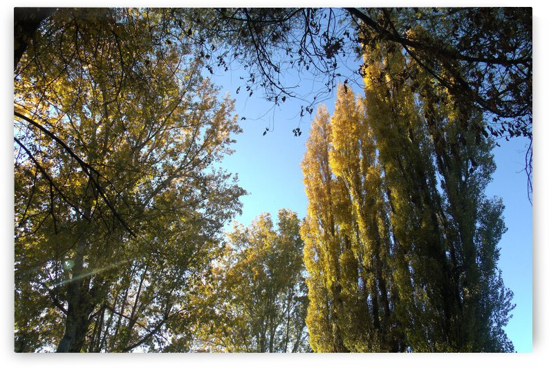 Falls Trees In October 8 by Sherrie Larch