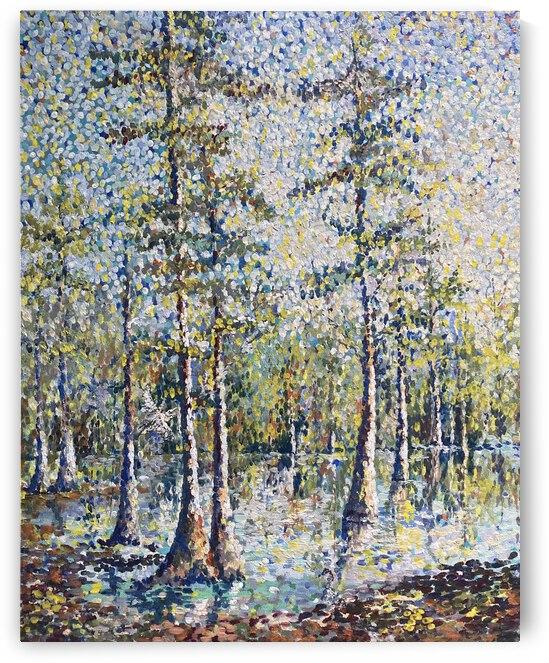 Louisiana cypress  by Cene
