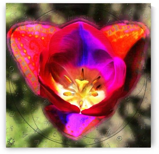 Tulipa by ChrisHarrisArt