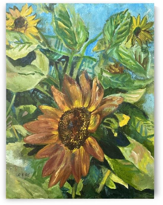 Sunflower  by Cene